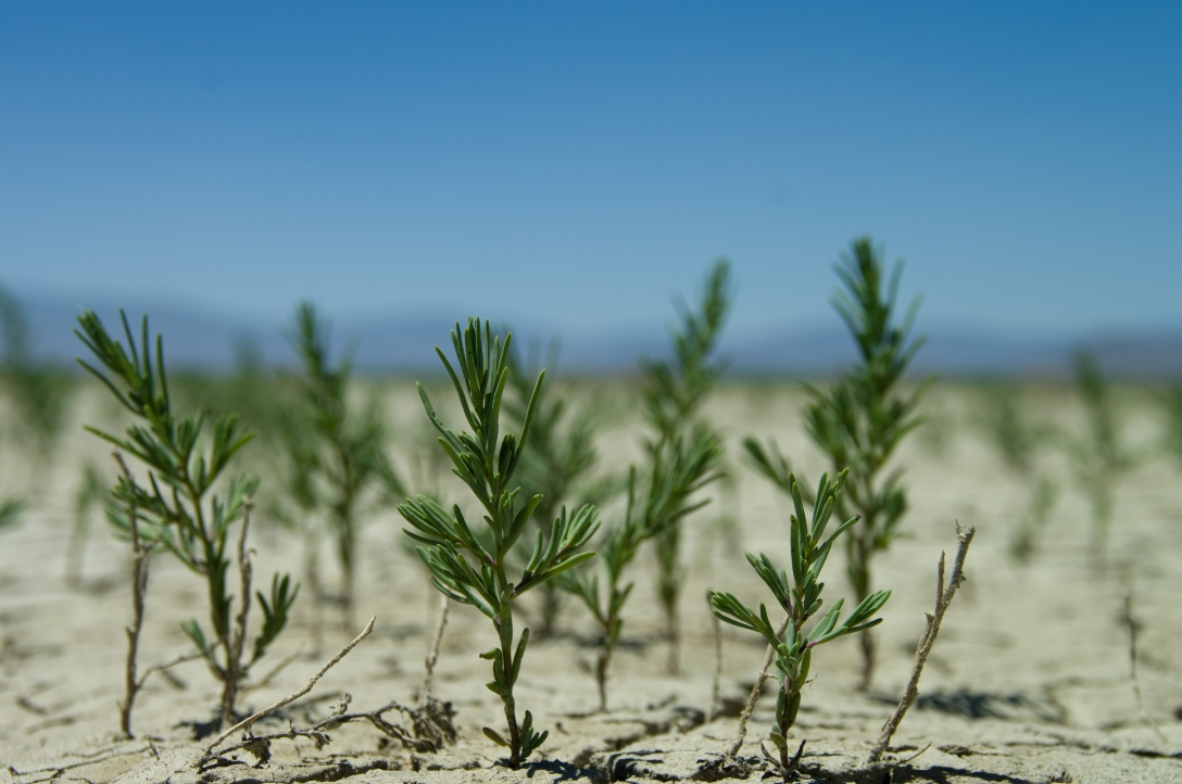 Small trees growing out of sand